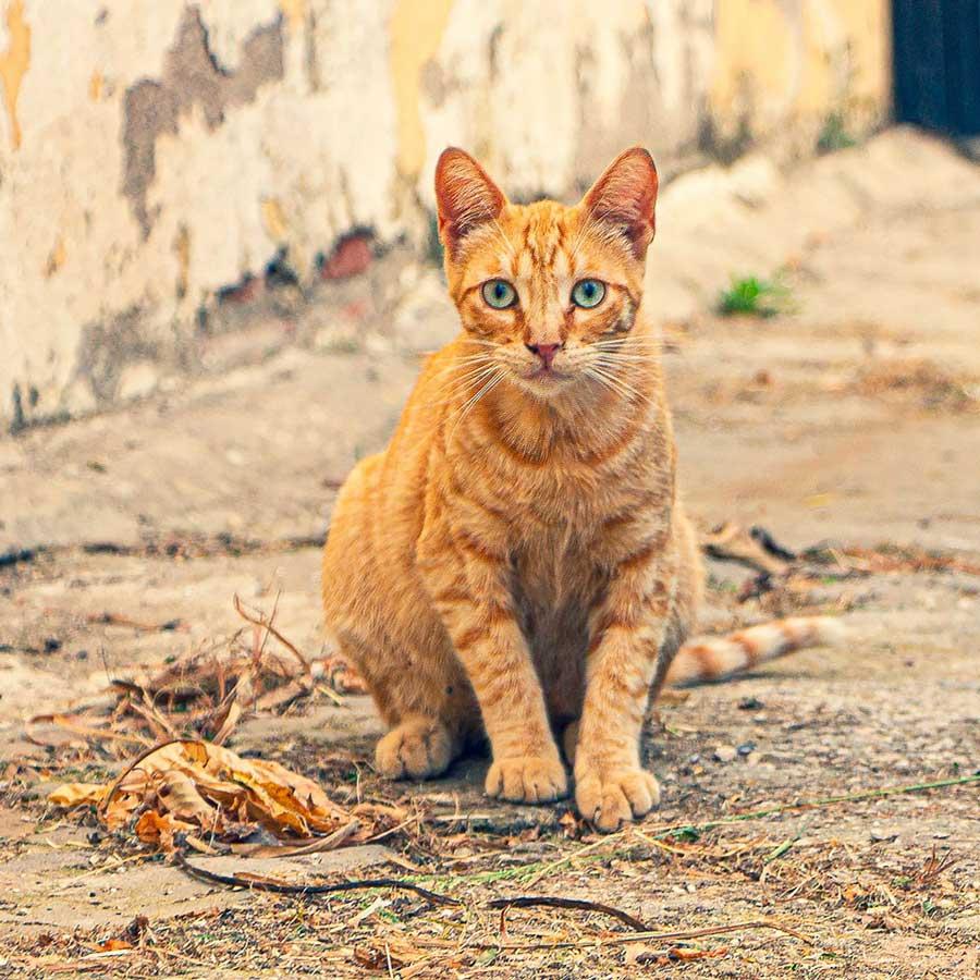 Felinos y otros animales